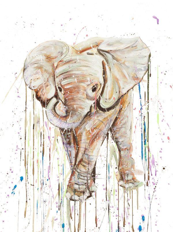 Elephant Calf 3