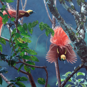 Raggi-paradicsommadár